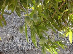 baobabe.jpg