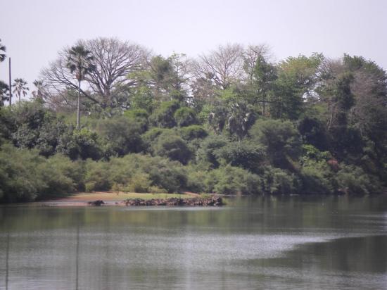 le-fleuve-gambie8.jpg